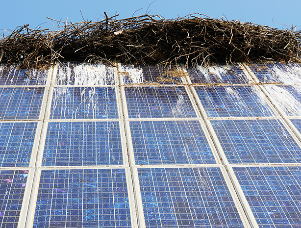SunBrush® mobil - bird droppings on pv system, bird droppings solar module, solar system bird droppings